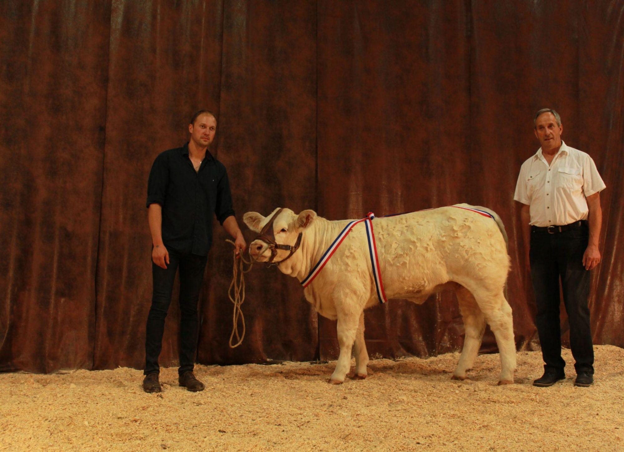 Pierre et Etienne Lauriol avec un veau Charolais lors d'un concours